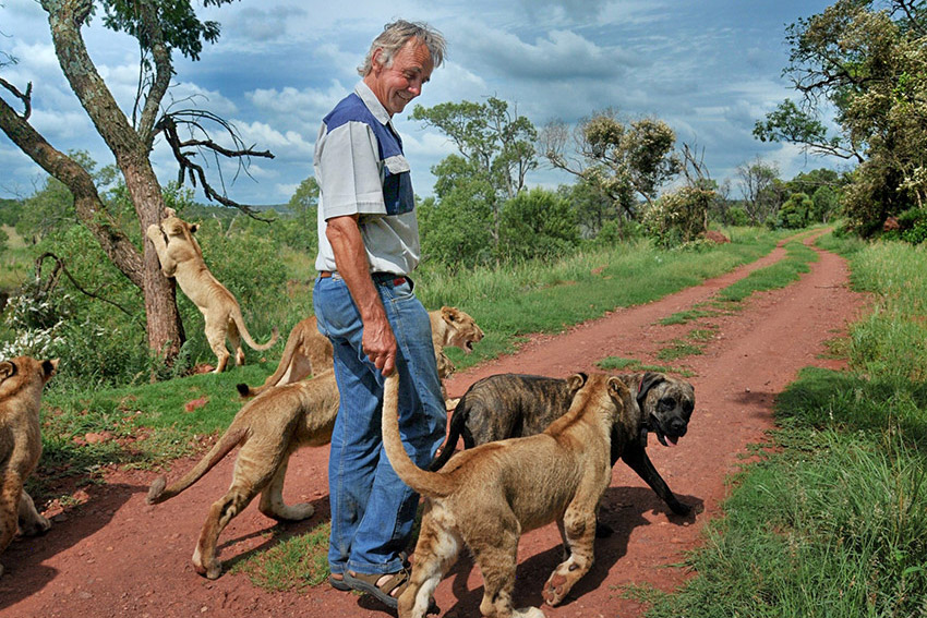 Colin walking with Lions