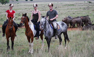 Horse Safari Bookings